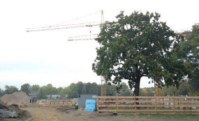 Baum geschützt auf einer Baustelle