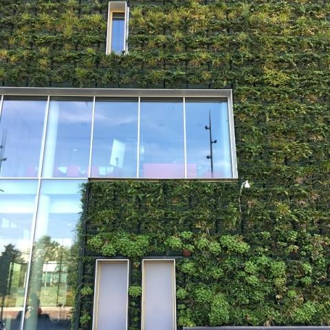 Fassadenbegrünung am neuen Venloer Rathaus