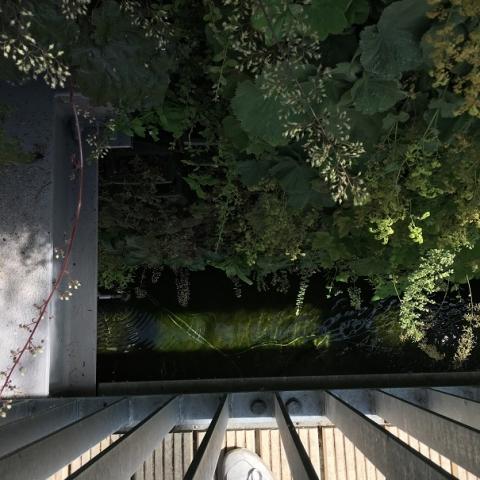 Teich im Dachgarten