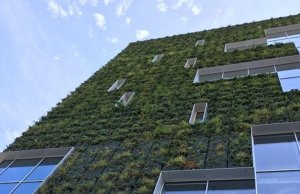 Venlo Rathaus Fassadenbegrünung