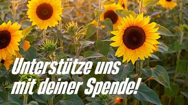 Sonnenblumen: Unterstütze uns mit deiner Spende!